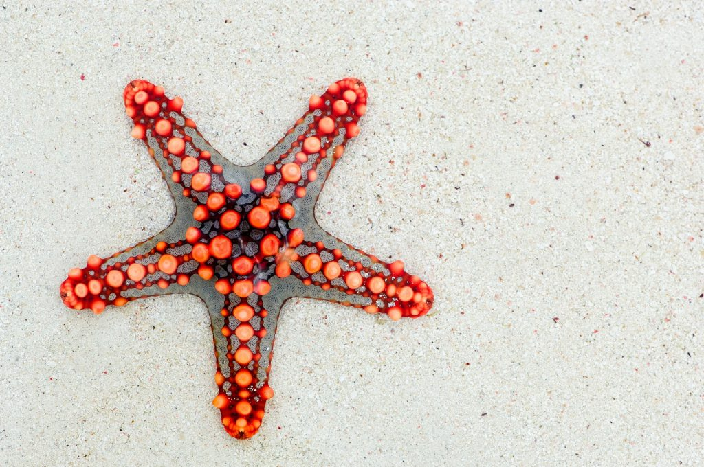 starfish on a beach relating to star technique